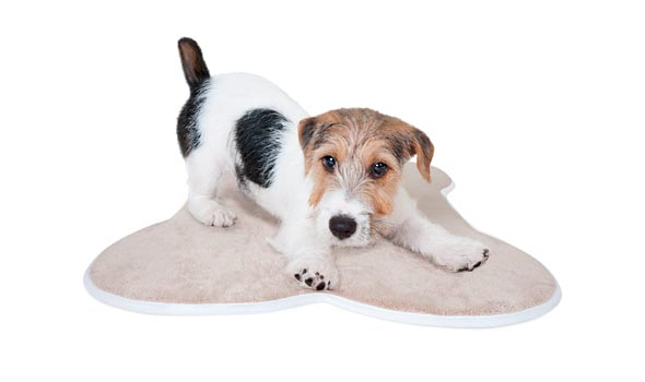 Buddy on Small Memory Foam Pet Mat