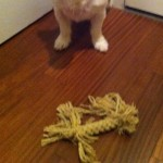Buddy's Toy of the Week: Rope Bone