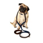 Memory Foam Pet Leash