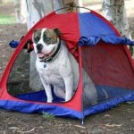 Pup Tent Time