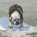 Woofs on Waves