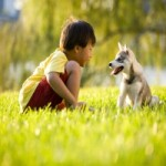 The Best Way to Prevent Dog Allergies