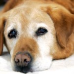 New Tricks for Taking Care of Old Dogs