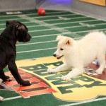 The Real Big Game on Sunday: The Puppy Bowl!
