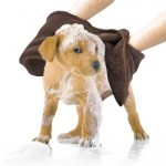 Spring Cleaning Your Pup