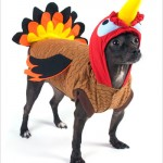 Of Turkeys & Dogs